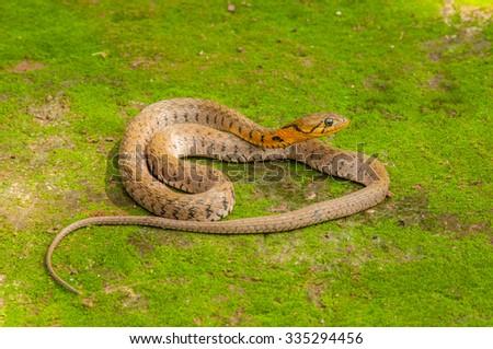 Snake found naturally - stock photo