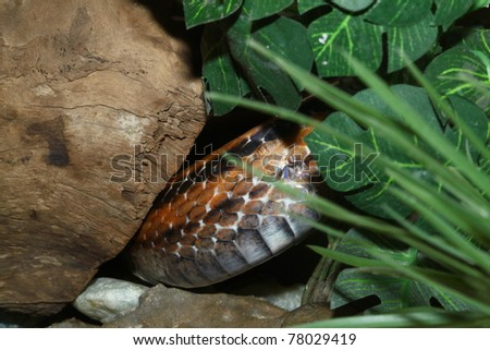 snake in cave - stock photo