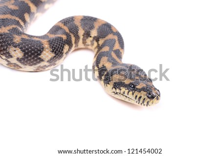 snake isolated over white background - stock photo