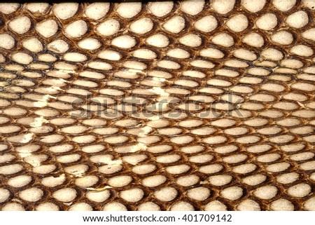 Snake  leather or  cobra skin texture - closeup, macro - stock photo