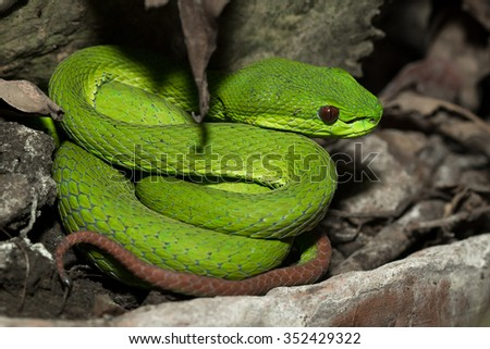 Snake live in showcase in zoo , Thailalnd,selective focus point - stock photo