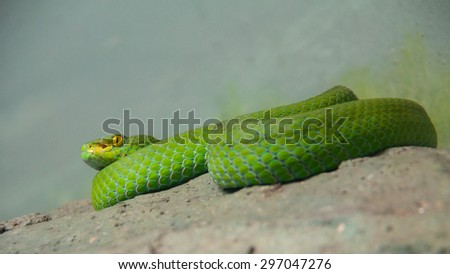 Snake living in showcase in zoo , Thailand - stock photo