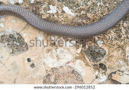 Snake on floor - stock photo