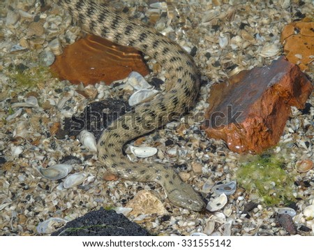 Snake on the sand. - stock photo