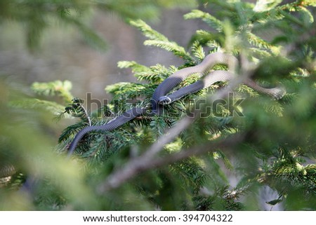 snake on the tree - stock photo