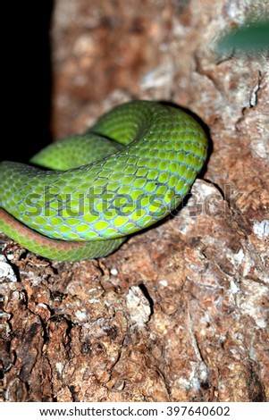 Snake on the tree - stock photo