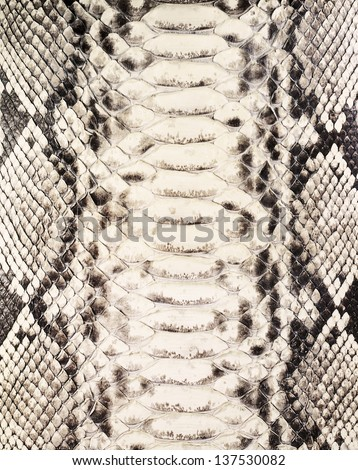 Snake skin background  - stock photo