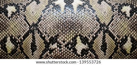 Snake skin, reptile - stock photo