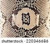 snake skin reptile texture - stock photo