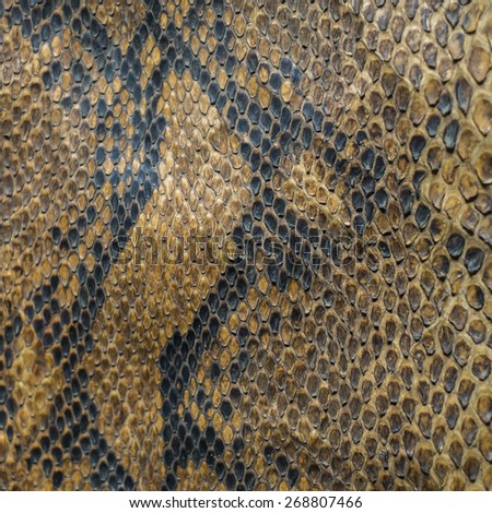 Snake skin texture and background - stock photo