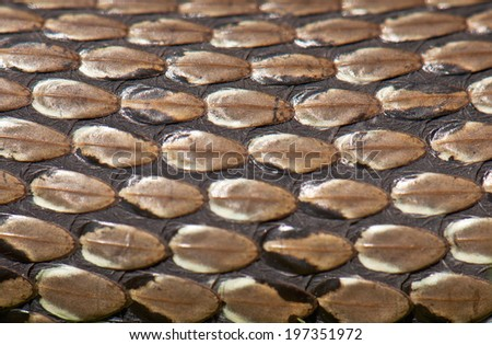 snake skin texture in the photo - stock photo