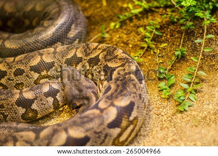 Snakes in a terrarium in the zoo