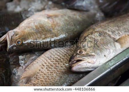Fresh spotted babylon on ice selection stock photo for Snappers fish chicken