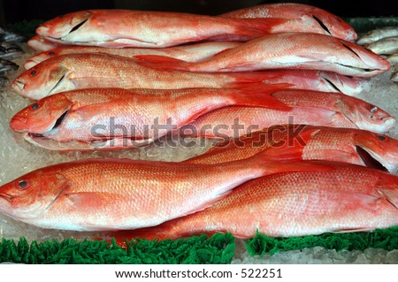 snapper grouper fish - stock photo