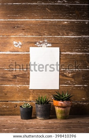sneakers with cactus hipster?sneakers?little green plant Cactus?Desert plants in small plants?Still Life Natural Mix of Six Cactus Plants on Vintage  Wood Background Texture - stock photo