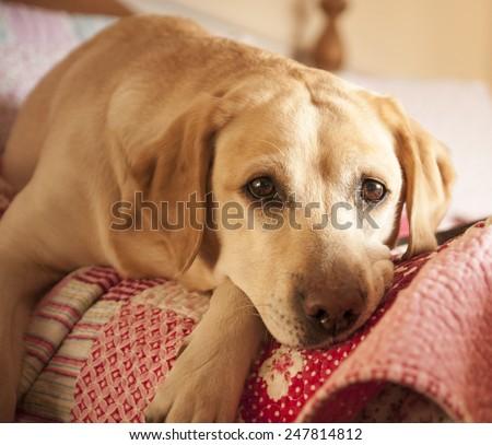snoozing - stock photo