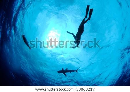 Snorkeler, shark and fish - stock photo