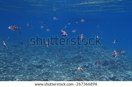 snorkeling in the colorful indian ocean