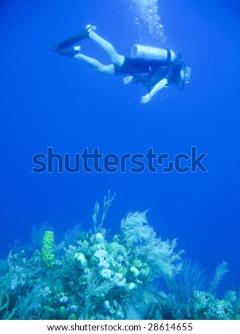 Snorking off the Galapagos Islands - stock photo