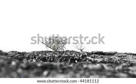 Snow bush - stock photo