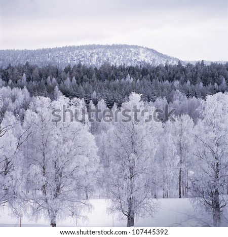 Snow-clad trees by mountain - stock photo