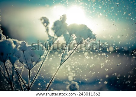 Snow covered branch against defocused background. Selective focus and shallow depth of field. - stock photo