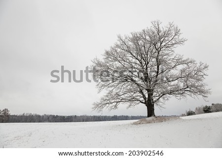 snow-covered field in a winter season - stock photo