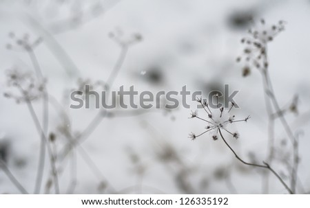 Snow covered field with dry weeds