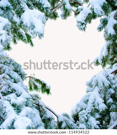 snow covered fir branches. Christmas tree in snow. Isolated over white. - stock photo