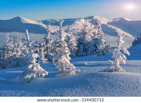 snow-covered firs in high mountains in winter - stock photo