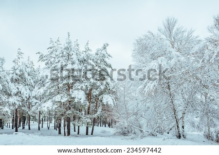 Snow-covered forest road, winter landscape. Cold and snowy winter road with blue evergreens and grey clouded skies. Winter background. Christmas and New Year Tree. Copy space - stock photo