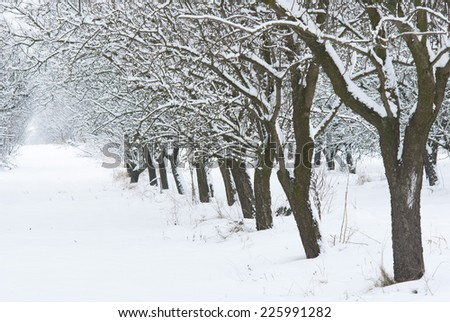 snow covered fruit garden - stock photo