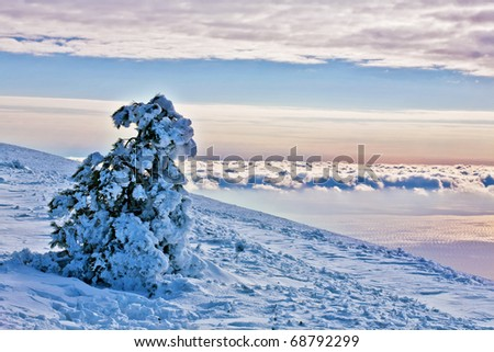 snow-covered fur-tree against the blue sky grows on a hillside above clouds. - stock photo