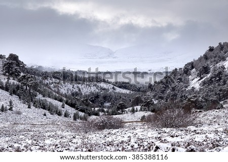 Snow covered Glenmore Forest Park, Cairngorms in the Scottish Highlands, UK. - stock photo