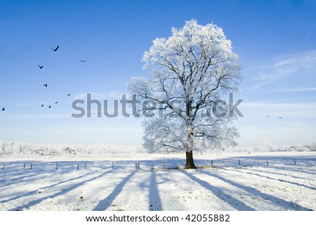Snow covered landscape and tree