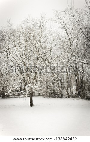 Snow covered lawn with trees in Winter. - stock photo