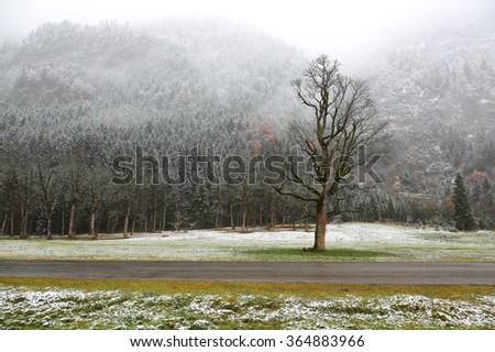 Snow covered maple trees on a meadow by the mountainside in a foggy gloomy morning ~ Beautiful maple trees and the first snow in deep autumn in Austrian Alps ~ Frozen world - stock photo