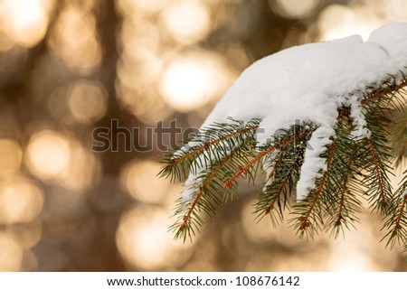 Snow covered pine tree branch during sunset with golden colors in the background - stock photo