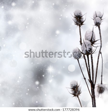 Snow covered plant on sparkle background - stock photo