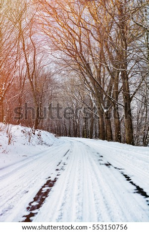 snow-covered road in the forest