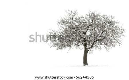 Snow-covered single tree isolated on pure white background - stock photo