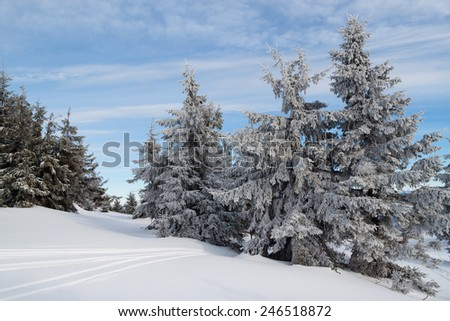 snow covered spruce against the blue sky - stock photo