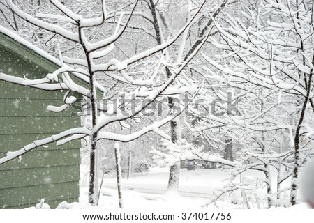 snow covered tree and branches in back yard - stock photo