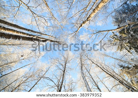Snow covered tree perspective view looking up - stock photo