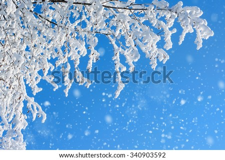 Snow covered trees against a blue sky - stock photo