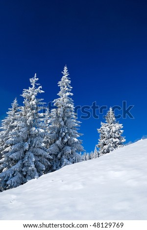 Snow-covered trees against the blue sky. Winter. The picture was taken in the Ukrainian Carpathians. - stock photo