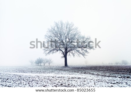 Snow covered trees and field - stock photo