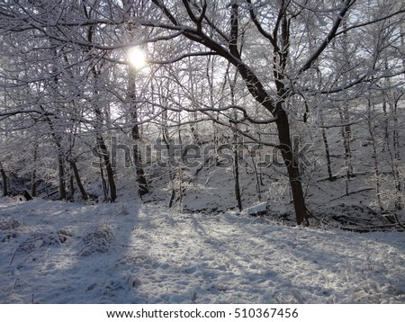 Snow covered trees around the stream of water and the sun is shining