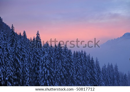 Snow-covered trees at sunset, Dolomites, South Tyrol, Alps, Italy - stock photo