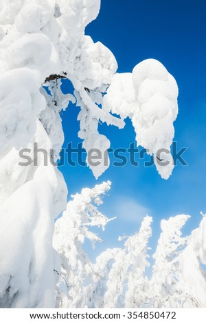 Snow covered trees in a forest after snowfall. Beautiful winter landscape.